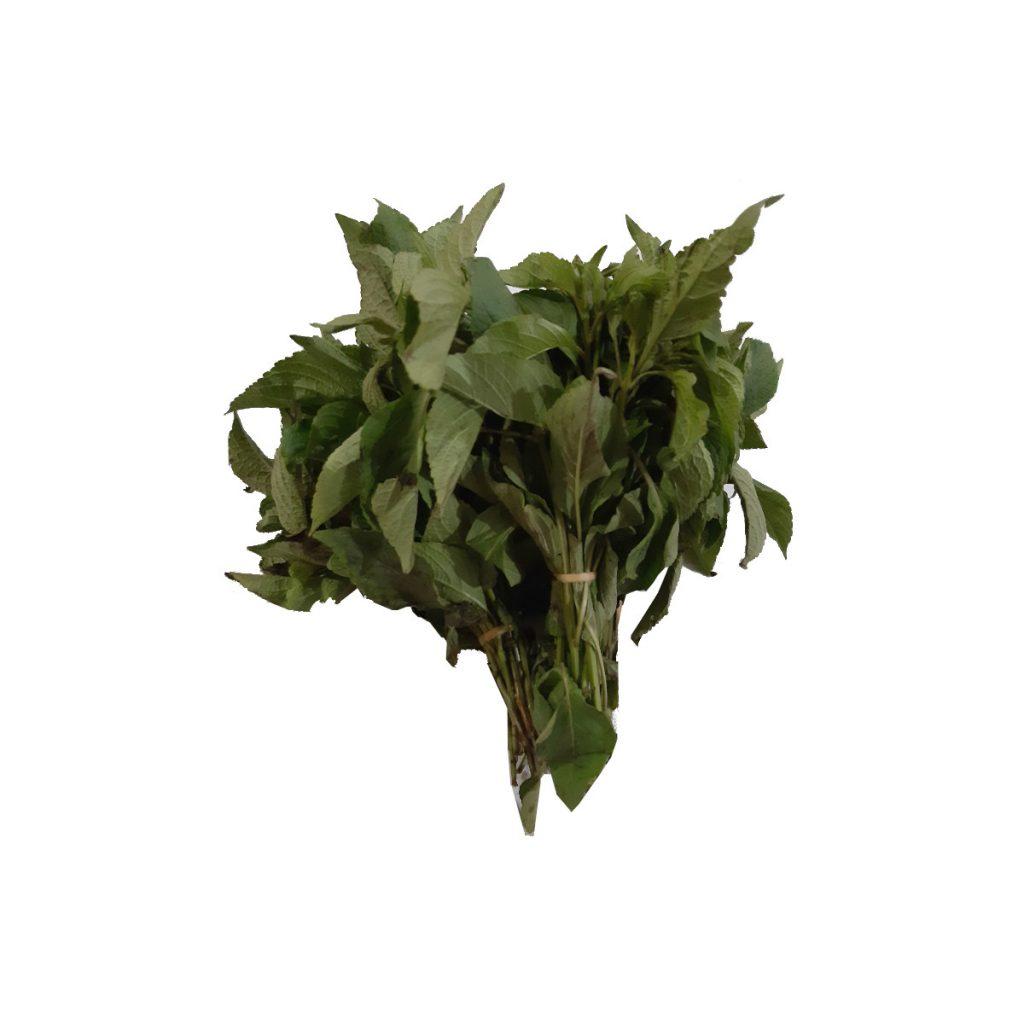 Scent Leaf (Efinrin)