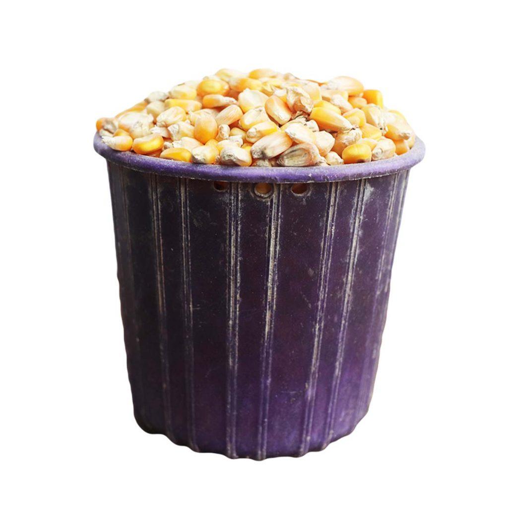Corn Yellow Half Mudu